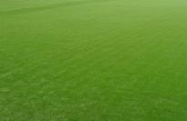人造草坪出现老化现象
